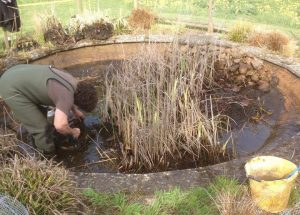 Pond Cleaning